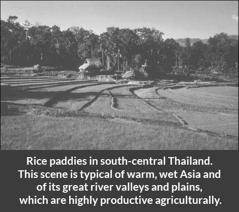 Rice-paddies-in-south-central-Thailand-culture-of-asian